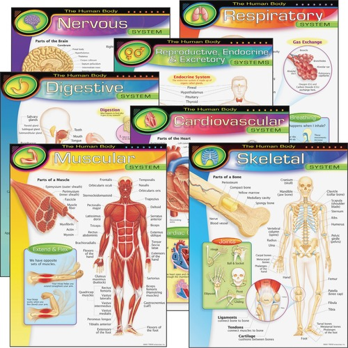 TREND 38913 The Human Body Learning Chart