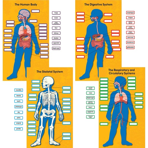 Carson-Dellosa 110178 Human Body Bulletin Board Set